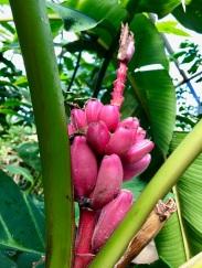 What may be bananas